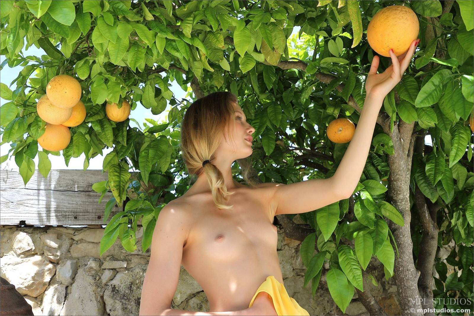 Белокурая девка под апельсиновым деревом - фото